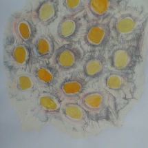 lotus kresba