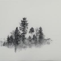 stromy ze svateho kopecku